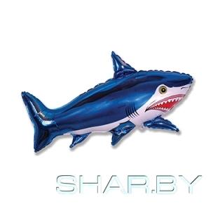 Акула большая синяя